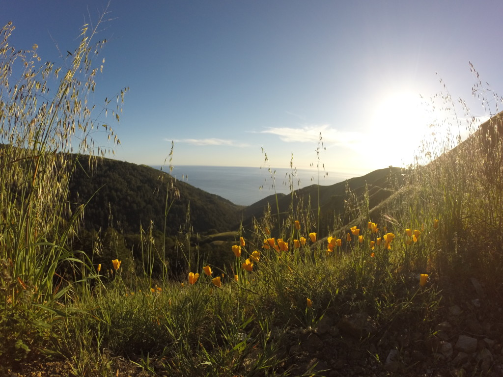 California - poppies, sunshine, ocean, and a sweet view